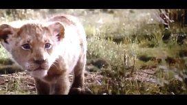 Xvideos Rei Leão